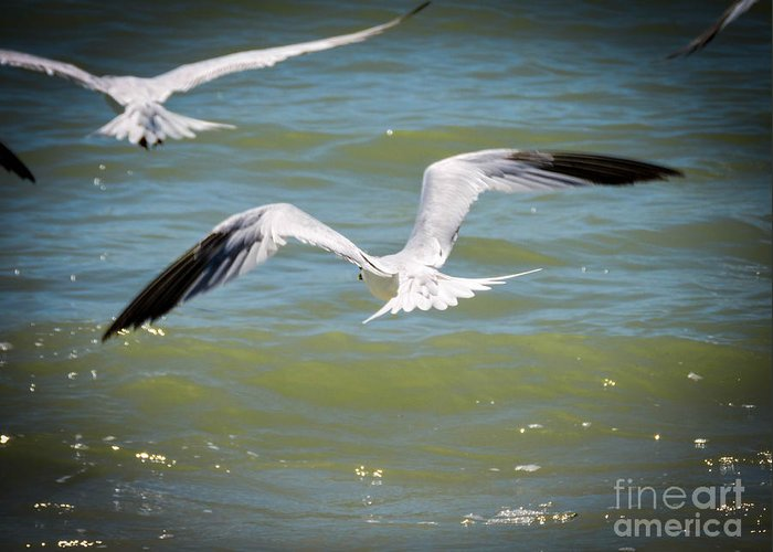 Skimmers Greeting Card featuring the photograph Skimmers In Flight by Marilee Noland
