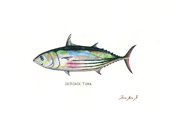 Tuna Fish Greeting Card featuring the painting Skipjack Tuna by Juan Bosco