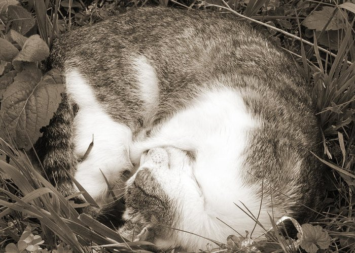 Pets Greeting Card featuring the photograph Sleeping by Daniel Csoka