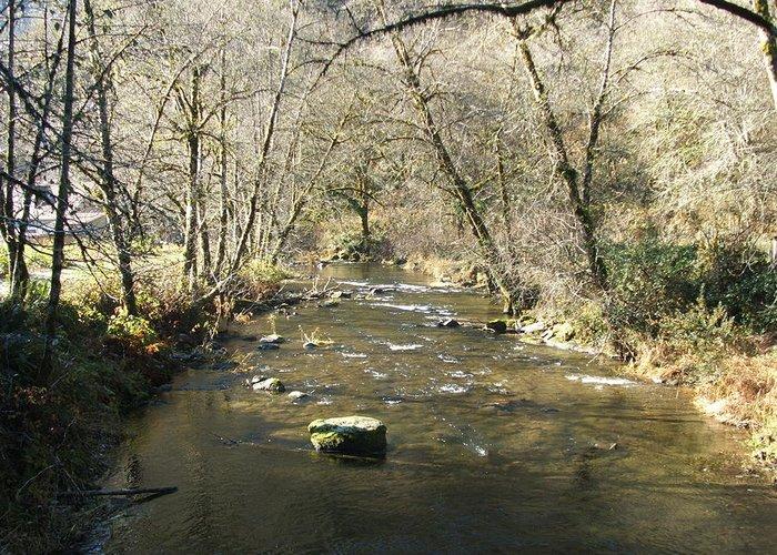 River Greeting Card featuring the photograph Sleepy Creek by Shari Chavira