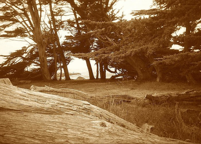 Seascape Greeting Card featuring the photograph Sleepy Shore Sepia by Maggie Cruser