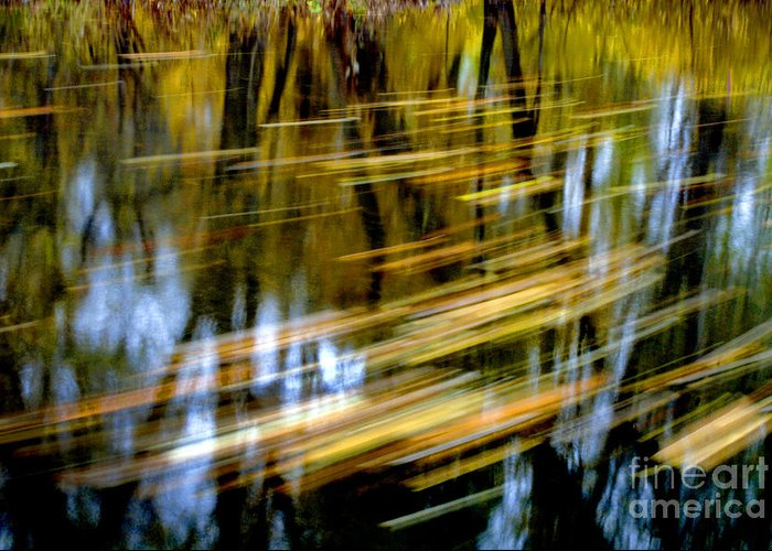 Reflection Of Trees In Stream Greeting Cards