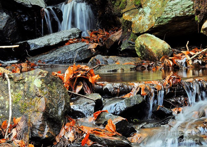 Stream Greeting Card featuring the photograph Small Stream by Mim White
