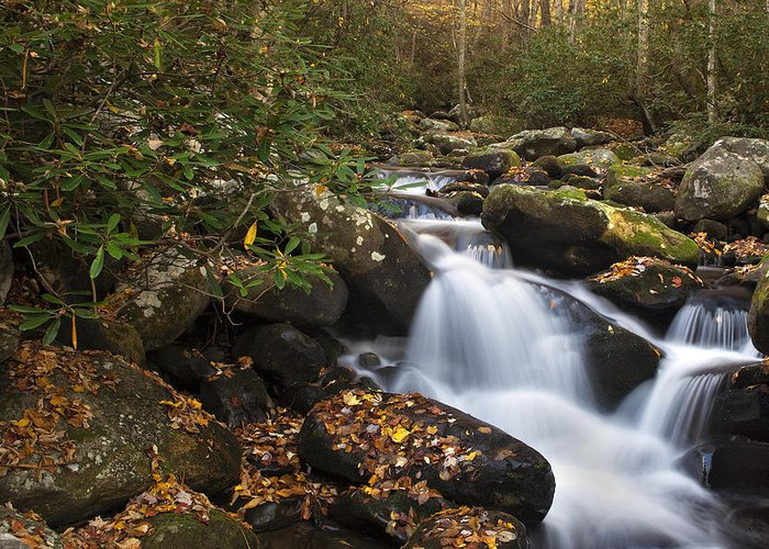 Waterfall Greeting Card featuring the photograph Smokies Stream In Autumn by Andrew Soundarajan
