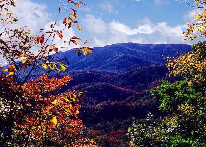 Mountain Greeting Card featuring the photograph Smoky Mountain Autumn View by Nancy Mueller