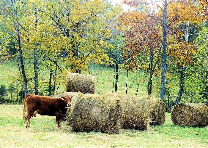 Animals Greeting Card featuring the photograph Smorgasbord by Jan Amiss Photography