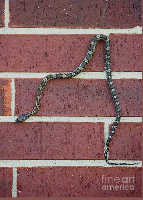 Nature Greeting Card featuring the photograph Snaking Down A Brick Wall by Lucyna A M Green