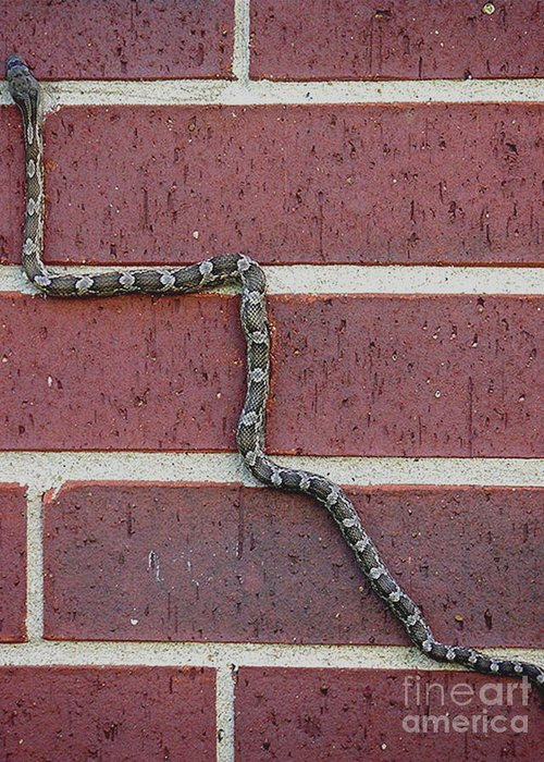 Nature Greeting Card featuring the photograph Snaking Up A Brick Wall by Lucyna A M Green