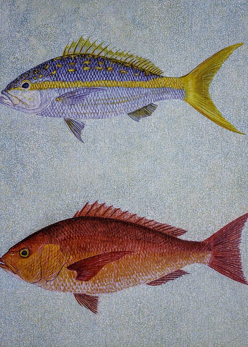 Yellow Tail Snappers Greeting Card featuring the painting Snappers by Manuel Lopez