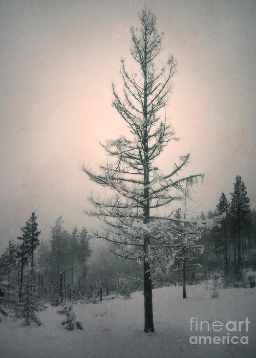 Winter Greeting Card featuring the photograph Snow And The Remnants Of The Fire by Tara Turner