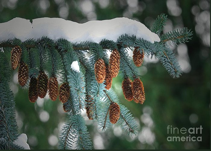Blue Spuce Cones Greeting Card featuring the photograph Snow Cones by Sharon Talson