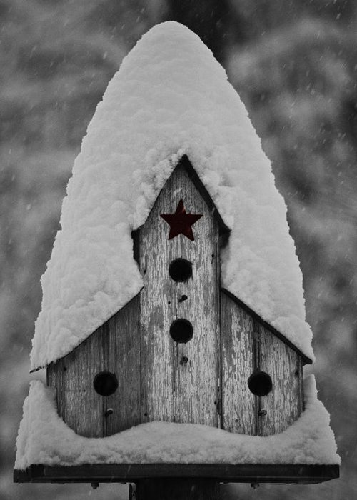 Snow Greeting Card featuring the photograph Snow Covered Birdhouse by Teresa Mucha