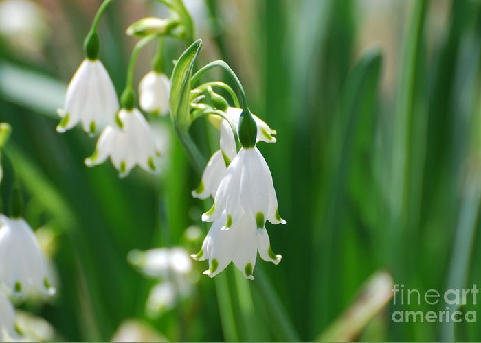 Snow Drop Lily Greeting Card featuring the photograph Snow Drop Lily by DejaVu Designs