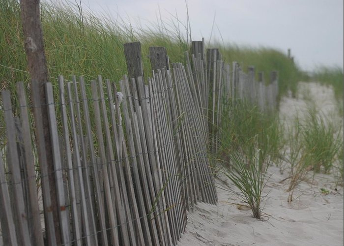 Sand Greeting Card featuring the photograph Snow Fence by Carla Neufeld