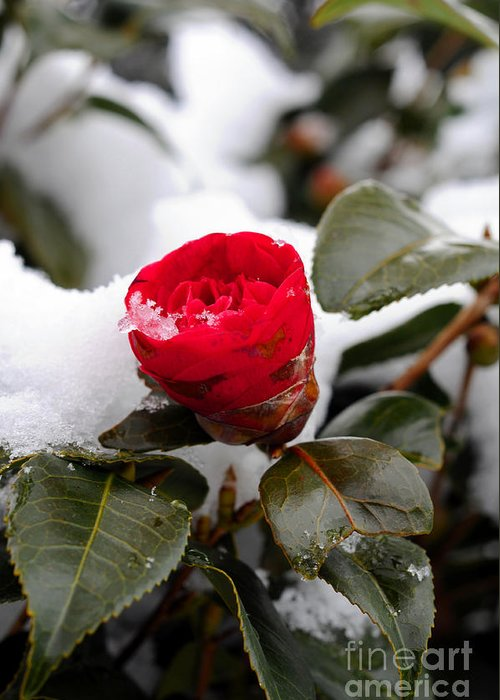Snow Greeting Card featuring the photograph Snow Flower by Maureen Norcross