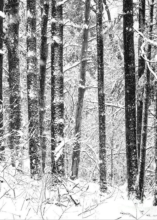 Black And White Photography Greeting Card featuring the photograph Snow In A Forest by Phil Perkins