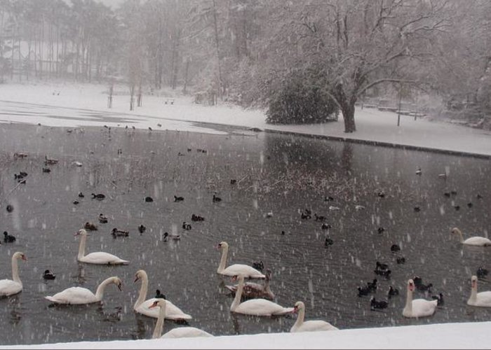 Nature Greeting Card featuring the photograph Snow Over Swan Lake by Valia Bradshaw