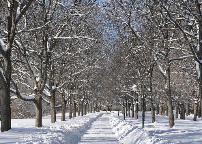 Snow Greeting Card featuring the photograph Snow Path by William A Lopez