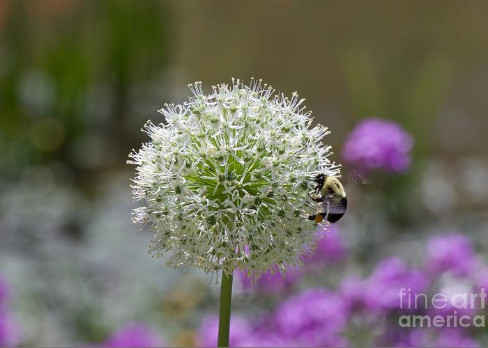 Snowball Greeting Card featuring the photograph Snowball And The Bumblebee by John Franke