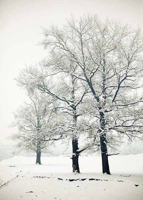Winter Greeting Card featuring the photograph Snowed by Gabriela Insuratelu