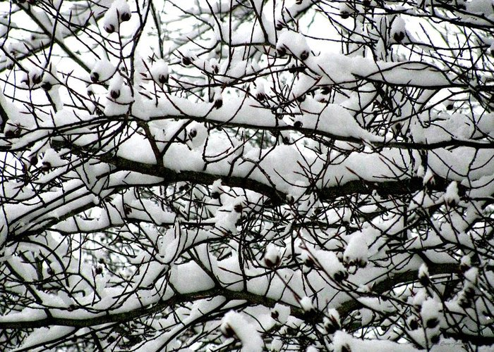 Foliage Greeting Card featuring the photograph Snowfall On Branches by Deborah Crew-Johnson