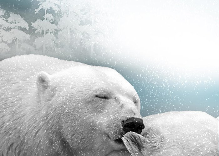 Bear Greeting Card featuring the photograph Snowstorm Kiss by Ericamaxine Price