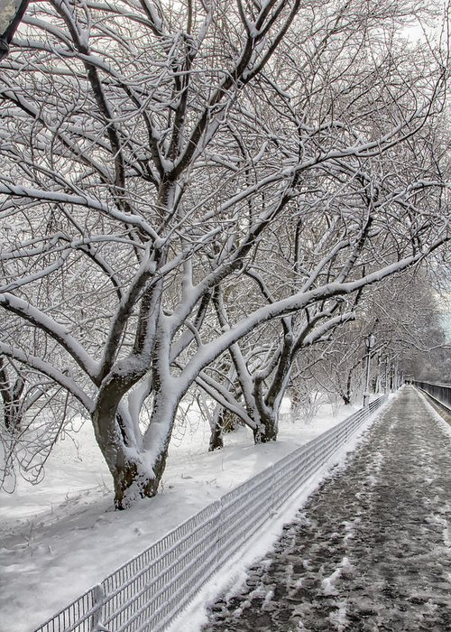 Snow Greeting Card featuring the photograph Snow,trees And Path by Robert Ullmann