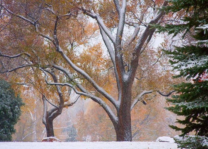 Trees Greeting Card featuring the photograph Snowy Autumn Landscape by James BO Insogna