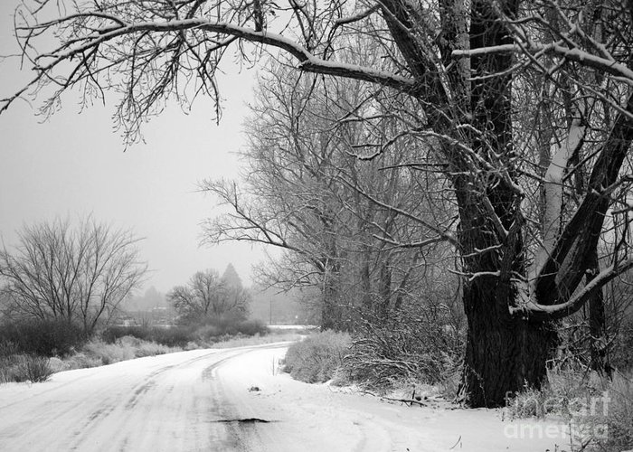 Winter Greeting Card featuring the photograph Snowy Branch Over Country Road - Black And White by Carol Groenen