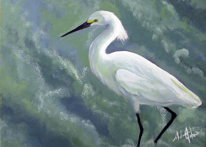 Egret Greeting Card featuring the painting Snowy Egret In Water by Adam Johnson