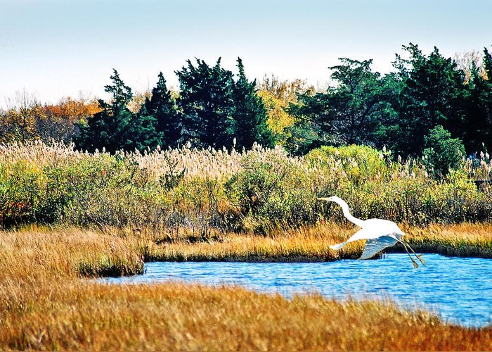 Landscape Greeting Card featuring the photograph Snowy Egret-island Beach State Park N.j. by Steve Karol