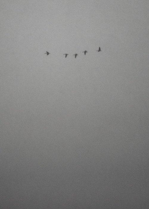 Snowy Greeting Card featuring the photograph Snowy Flight by Josh Baldo