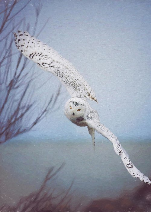Wildlife Greeting Card featuring the photograph Snowy Owl In Flight Painting 1 by Carrie Ann Grippo-Pike