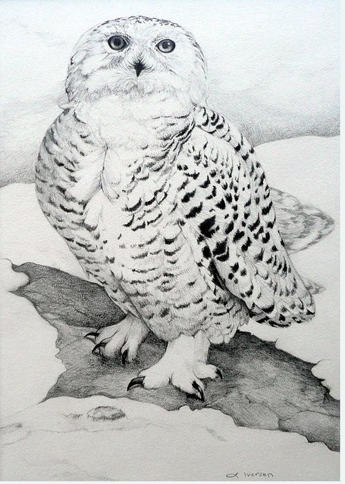 Snowy Owl Greeting Card featuring the drawing Snowy Owl by Jill Iversen