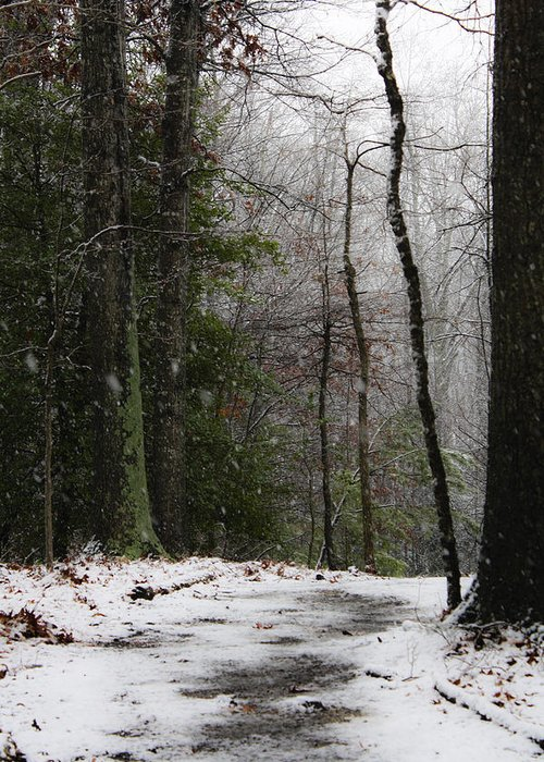 Snow Greeting Card featuring the photograph Snowy Trail Quantico National Cemetery by Teresa Mucha