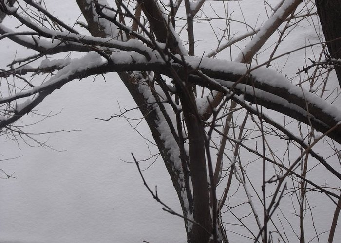 Abstract Greeting Card featuring the photograph Snowy Tree II by Anna Villarreal Garbis
