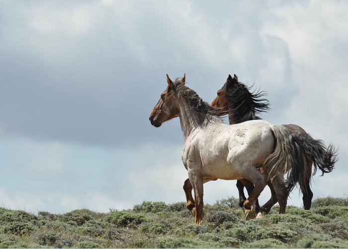 Wild Horses Greeting Card featuring the photograph So Long by Frank Madia