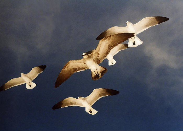 Seagulls Greeting Card featuring the digital art Soar by Ginger Howland