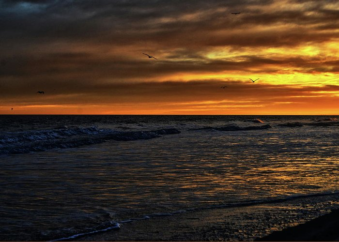 Atlantic Greeting Card featuring the photograph Soaring In The Sunset by Kelly Reber