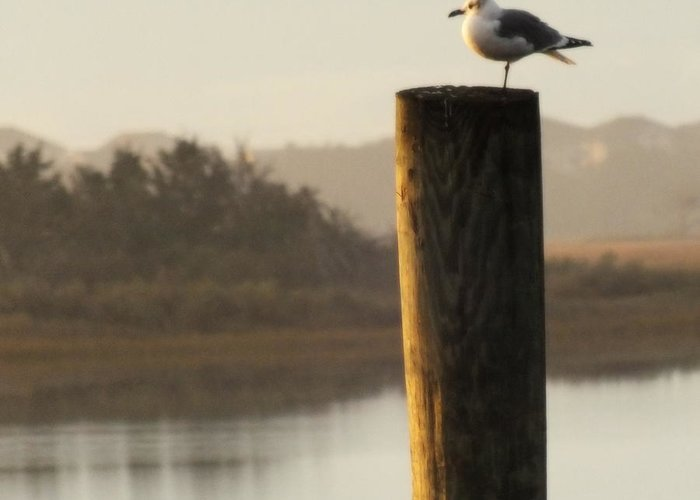 Seagulls Greeting Card featuring the photograph Soft Mornings by Karen Wiles