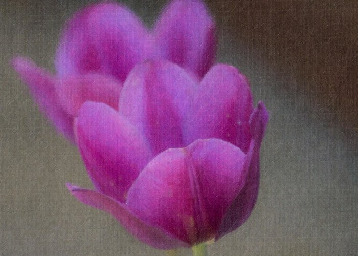 Tulip Greeting Card featuring the photograph Soft Pastel Purple Tulips by Teresa Mucha