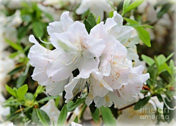 Azalea Greeting Card featuring the photograph Soft White Azaleas by Carol Groenen