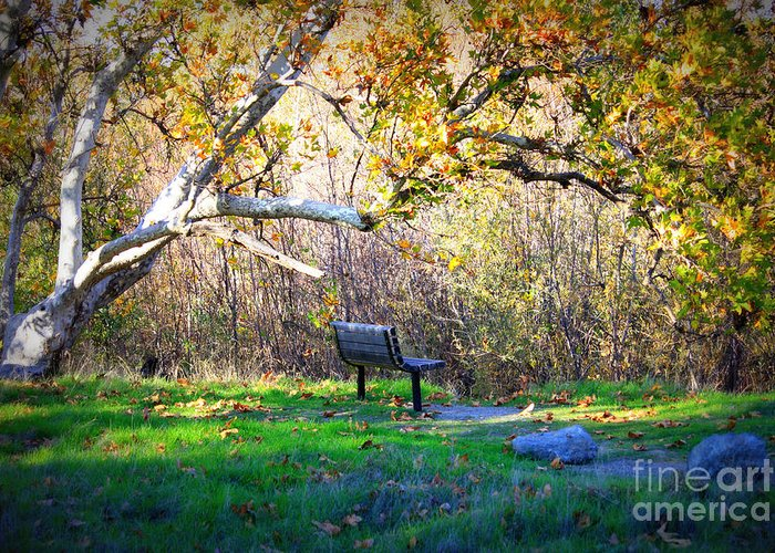 Landscape Greeting Card featuring the photograph Solitude Under The Sycamore by Carol Groenen