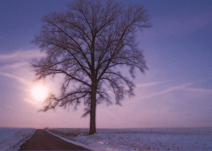 Tree On Country Road During Moonset Greeting Card featuring the digital art Solstice by Priscilla Rink