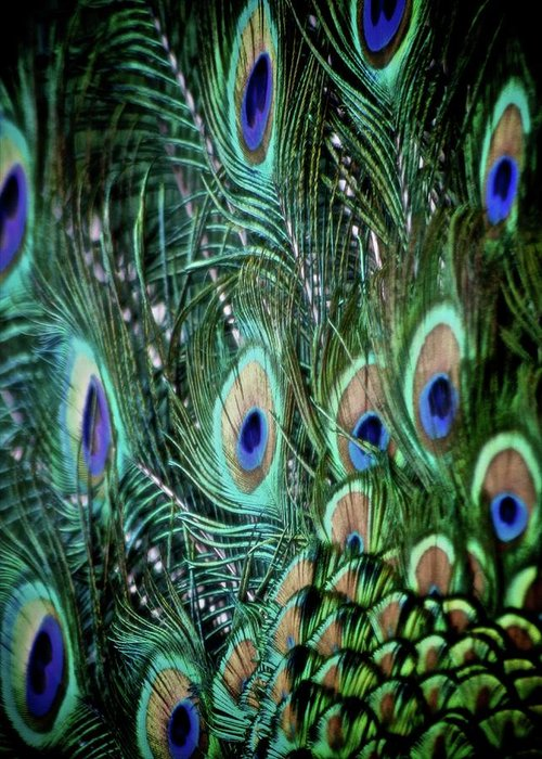 Feathers Greeting Card featuring the photograph Someone Is Watching You by Odd Jeppesen