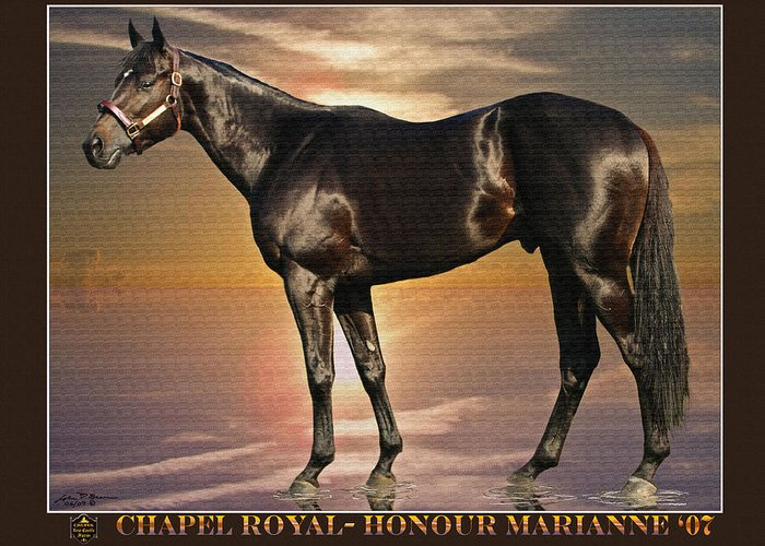 Race Horse Thoroughbred Colt Greeting Card featuring the painting Son Of Chapel Royal-honour Marianne'07 by John Breen