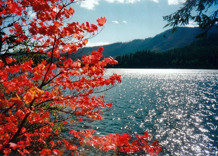 Landscape Greeting Card featuring the photograph Song Of The Fall. by Anastasia Michaels