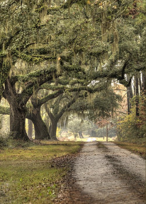 Plantation Greeting Card featuring the photograph Southern Drive Live Oaks And Spanish Moss by Dustin K Ryan