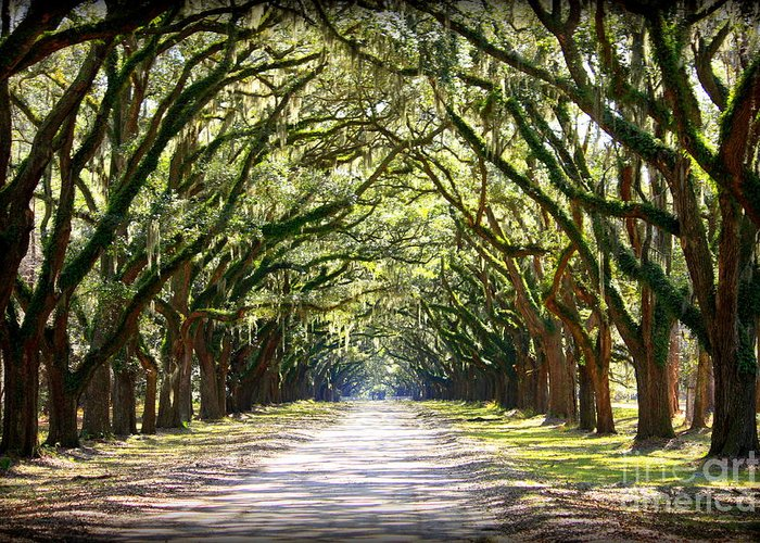 Landscape Greeting Card featuring the photograph Southern Way by Carol Groenen