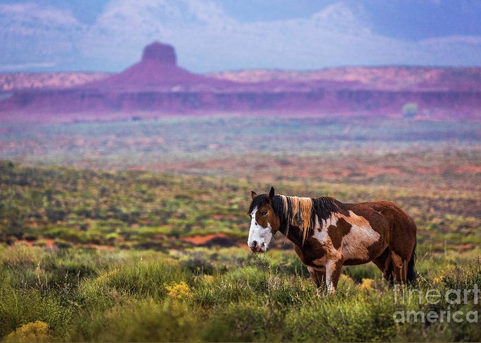 Southwest Greeting Card featuring the photograph Paint Horse by Anthony Michael Bonafede